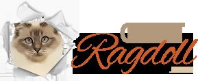 Chat-ragdoll.com