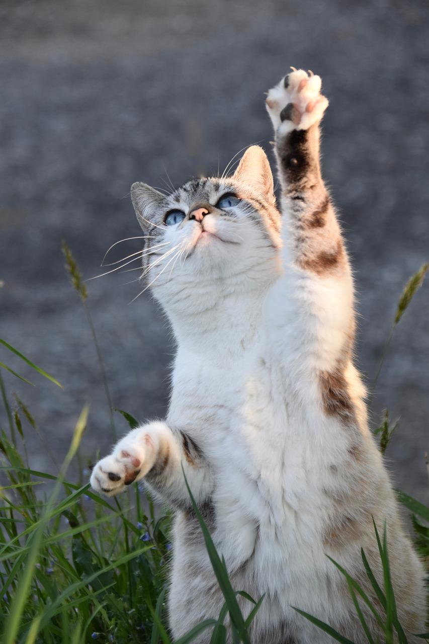 meilleure assurance pour votre chat